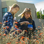 Image of two students conducting pollinator research on California fuchsias.