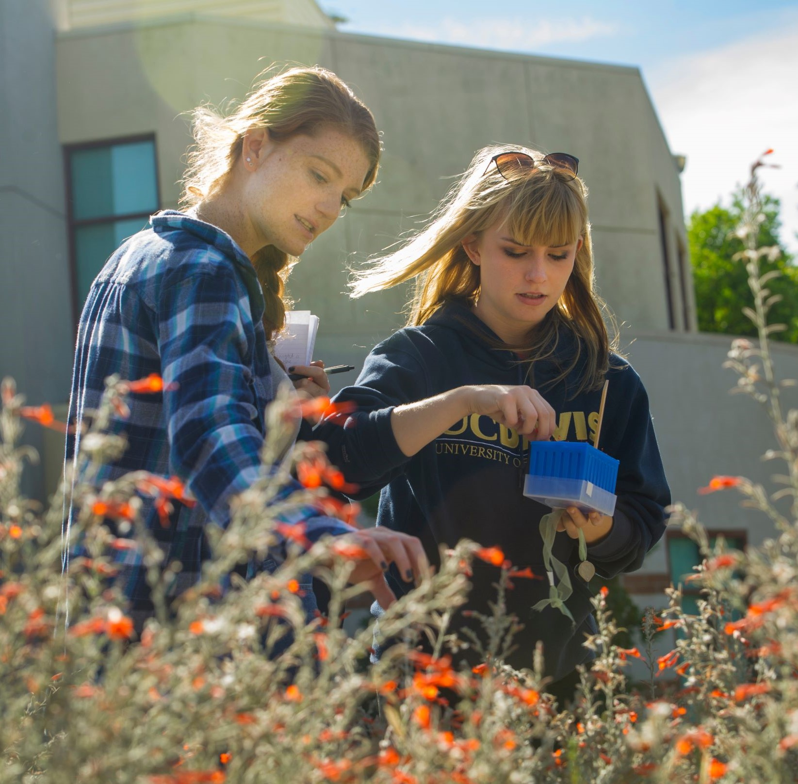 Two students examining fuchsta blossoms