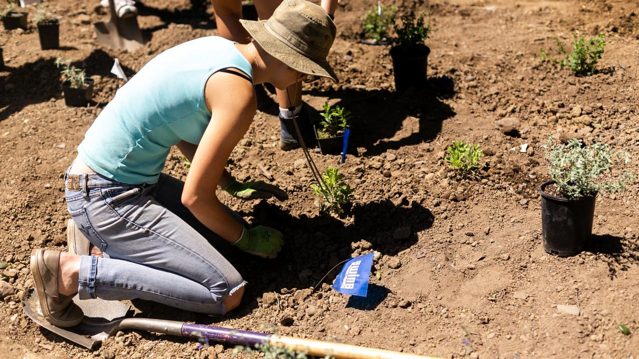 Woman planting a plant into the soil.