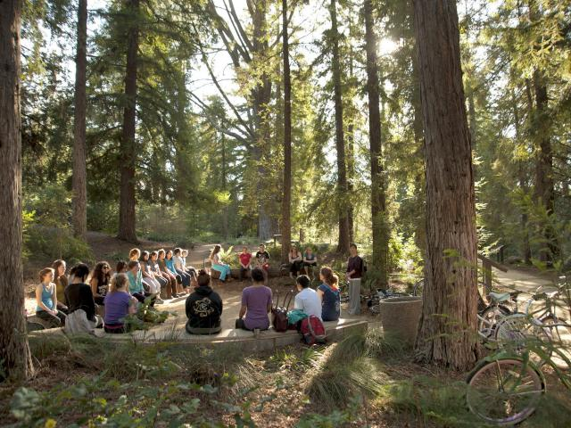Image of class being taught under the redwoods in the UC Davis Arboretum Redwood Grove.